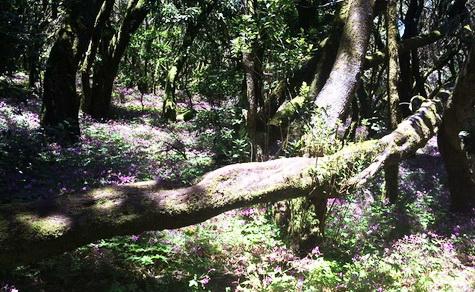 La Gomera - roheline paradiis.